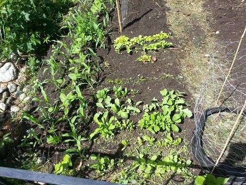 Seeding 1