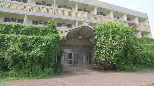 建築牆面上的爬藤植物