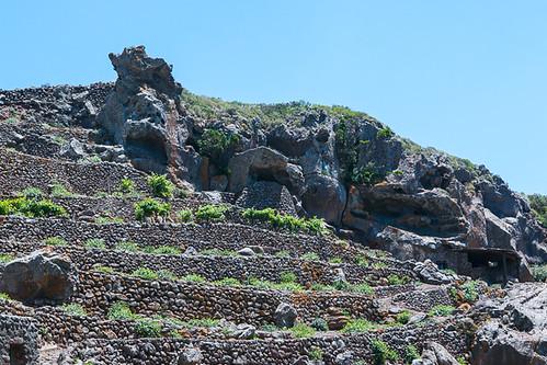 Pantelleria Capers, in Sicily