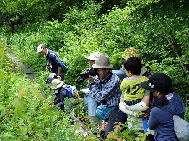 水口谷湿原で昆虫を観察中.木道に出ていたカナヘビも発見できた.
