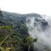 Forest   Mount Kinabalu by adiaphane