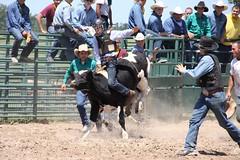 western riding(0.0), equestrian sport(0.0), charreada(0.0), jockey(0.0), barrel racing(0.0), animal sports(1.0), rodeo(1.0), event(1.0), sports(1.0), bull riding(1.0),