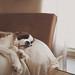 pillow by lindy.pfaff