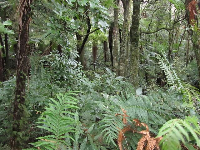Vegetación en Nueva Zelanda