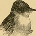 "Image from page 158 of ""A-birding on a bronco"" (1896) by Internet Archive Book Images"