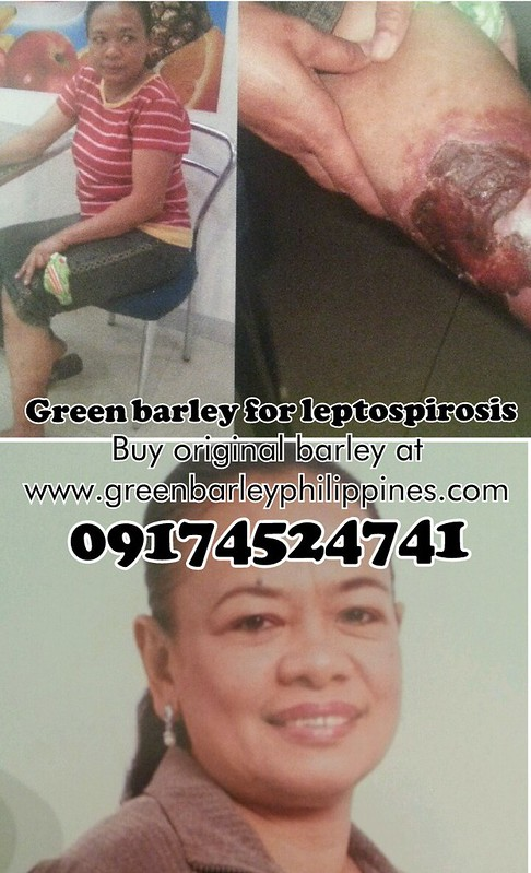 green-barley-leptospirosis