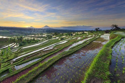bali sunrise indonesia landscape photography tour guide ricefield jatiluwih tabanan baliphotography balitravelphotography baliphotographytour baliphotographyguide