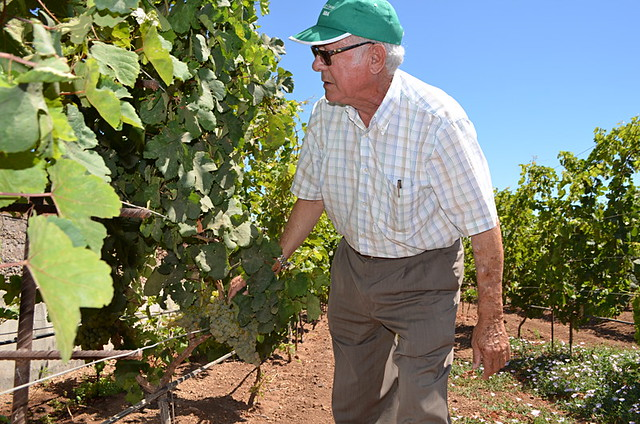 Cándido Hernández Pío amongst his vines