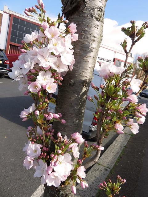 Blossom Trunk, Canon POWERSHOT SX700 HS