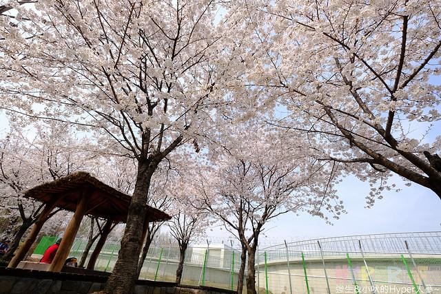 首爾林seoul forest (29)