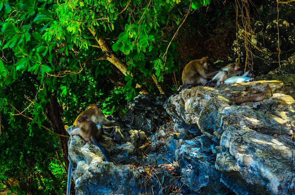 Monkeys @ Monkey Beach on Ko Phi Phi Don