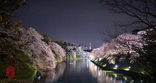 Sakura glow.