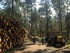 logging, woodland, wood, tree, forest, natural environment, rural area,