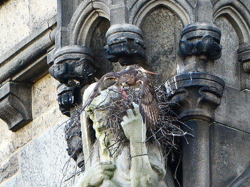Cathedral Hawk Nest (9348)