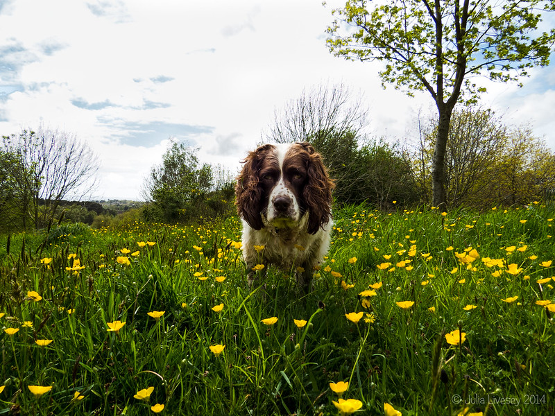 Max in the celandines