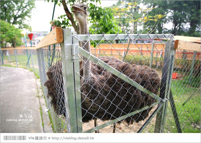 【彰化景點】克林姆莊園Cream Manor~小型動物園!戶外親子同遊好去處38