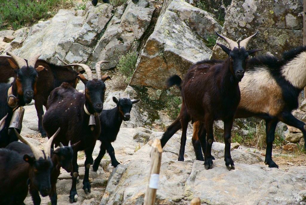 Reserva Natural de la Garganta de los Infiernos_Valle del  Jerte (16)