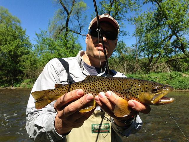 bigger-trout