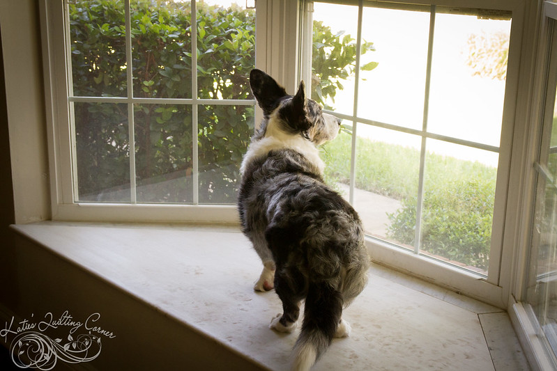 Corgi Window Seat