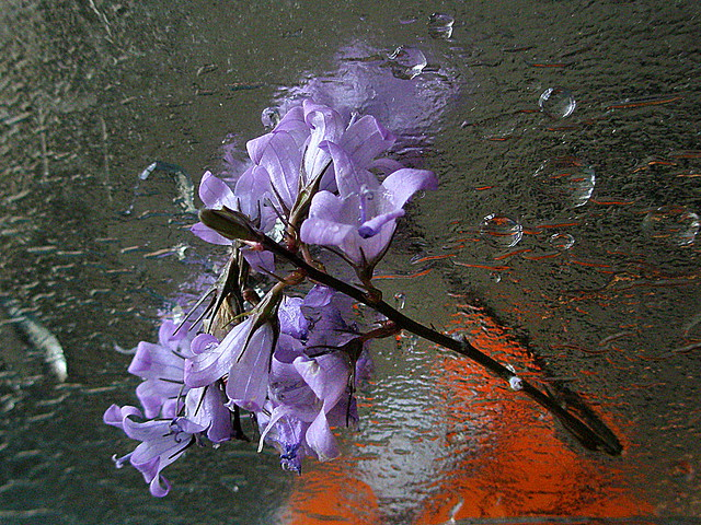 Reflejos. / Reflections.