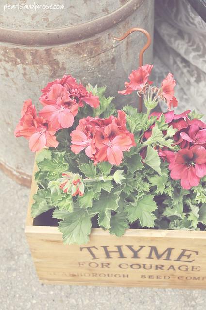 thyme_geraniums_web