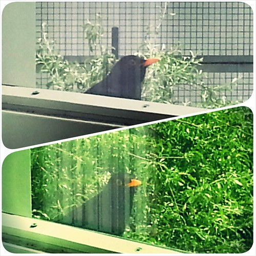 Natuur op de werkplek...