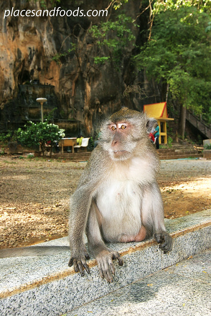 tiger cave temple monkey