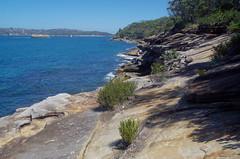Baeckea imbricata, Obelisk Beach, Sydney, NSW, 16/01/14