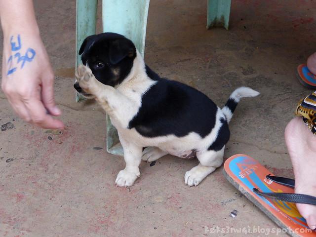 18 Vang Vieng Cheryl High Five Puppy