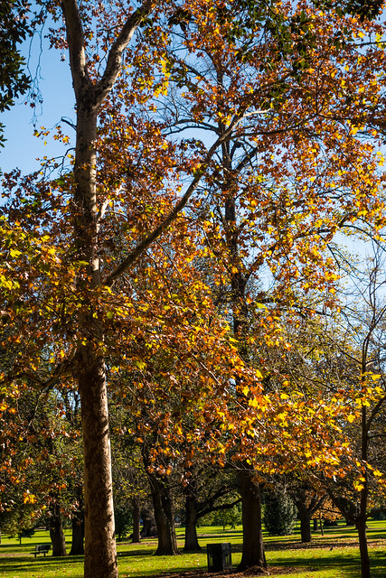 Autumn, Botanic Park