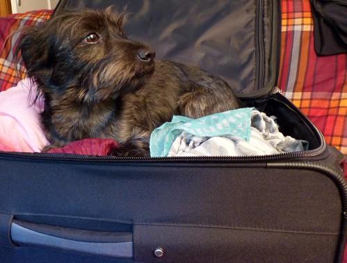 Buddy says bye bye for a few days, me too 👋