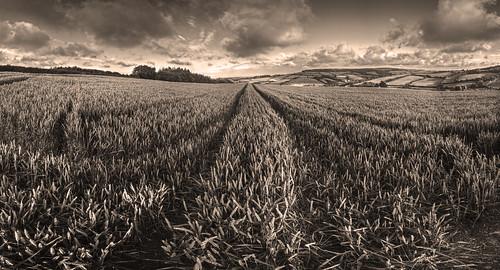 panorama sepia landscape countryside devon hdr cloudscape wheatfield ashcombe