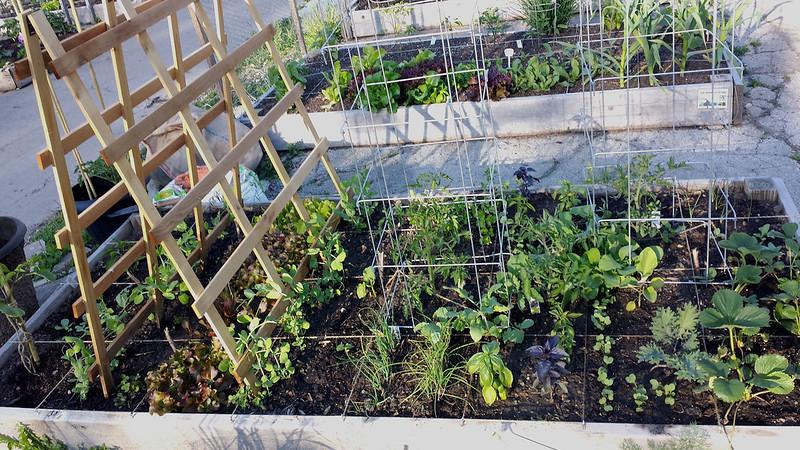 5-31-14 garden