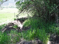 New feeder ditch off Shipee Ditch