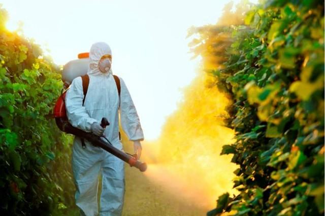 1_pesticidas--diarioecologia.jpg