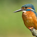 Kingfisher by KHR Images