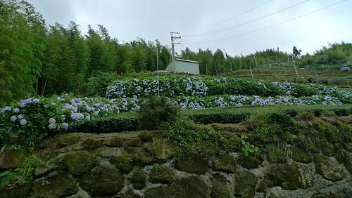 20140622-溪頭-武岫農場 (74)