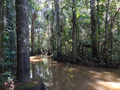 nature reserve, wetland, swamp, woodland, tree, river, riparian forest, nature, old-growth forest, forest, bayou, natural environment, wilderness, jungle, biome,