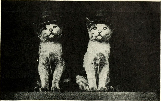 """Image from page 42 of """"Kittens and cats; a book of tales"""" (1911)"""