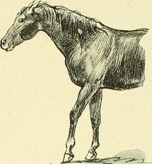 """Image from page 463 of """"The standard horse book, comprising the taming, controlling and education of unbroken and vicious horses"""" (1895)"""