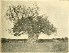 "Image from page 117 of ""Essex naturalist: being the journal of the Essex Field Club"" (1887)"