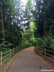 Mill Creek North Creek Trail