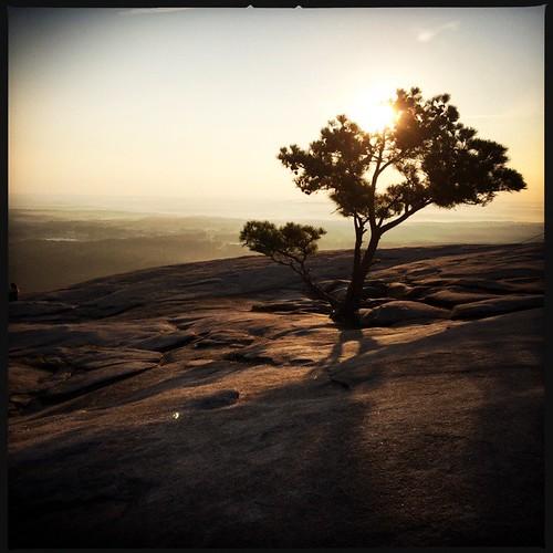 mountain tree nature sunrise georgia stonemountain dcfilm hipstamatic janelens