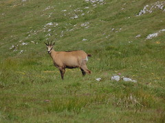 tundra(0.0), herd(0.0), white-tailed deer(0.0), elk(0.0), animal(1.0), prairie(1.0), deer(1.0), plain(1.0), grazing(1.0), fauna(1.0), meadow(1.0), chamois(1.0), pasture(1.0), grassland(1.0), wildlife(1.0),
