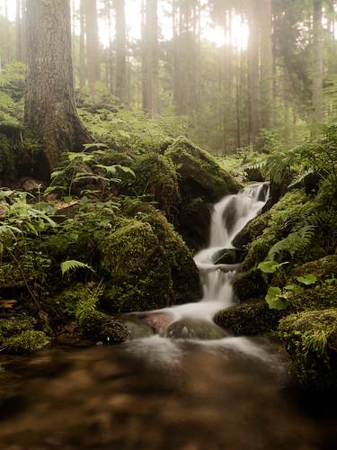 von Fall zu Fall - Schwarzwaldtour