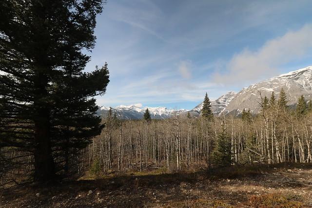 Yamnuska trails clearing and marking