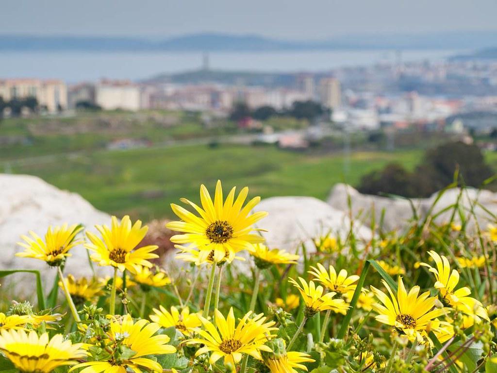 Flowers. #coruña #bens #park #photography