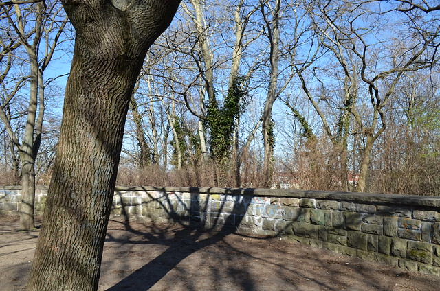 Volkspark Friedrichshain Berlin_trees and shadows