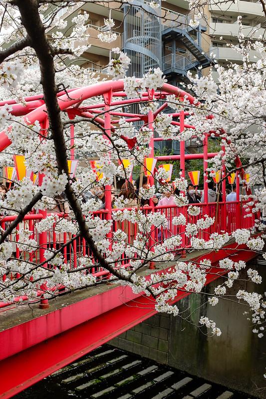 20140409_02_Meguro River × Cherry blossom