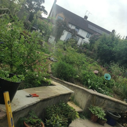 The garden. Progress.